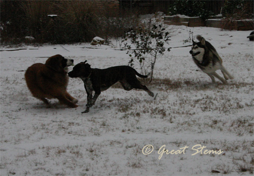 snowl02-04-11.jpg