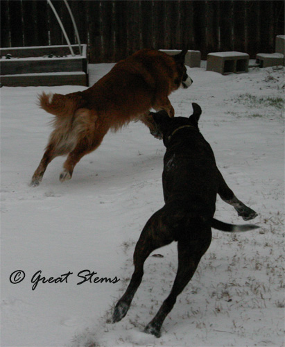 snown02-04-11.jpg