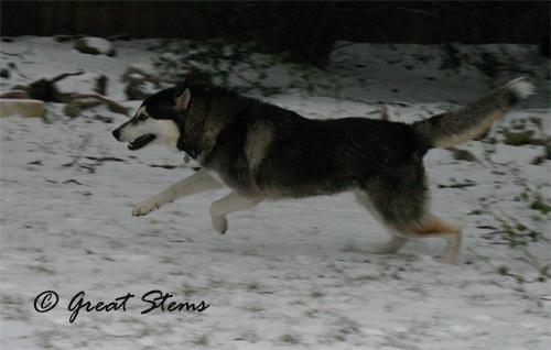 snowo02-04-11.jpg