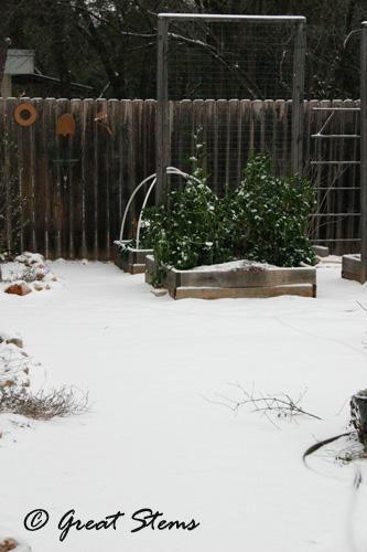 snowp02-04-11.jpg
