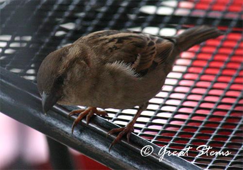 sparrow2b02-21-10.jpg
