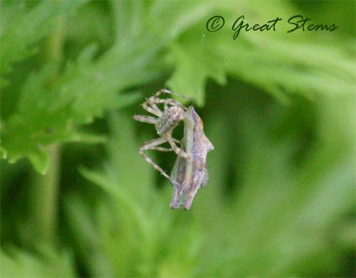spiderb06-24-10.jpg