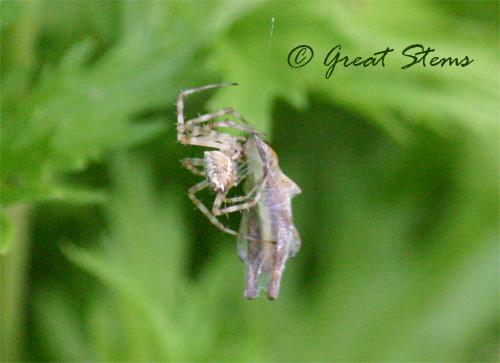 spiderd06-24-10.jpg