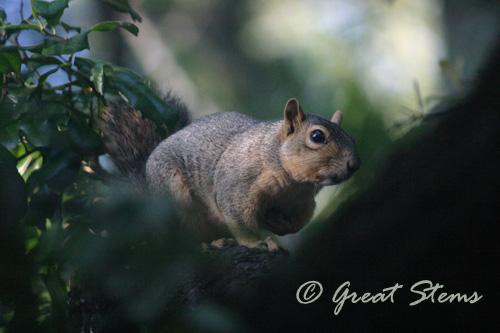 squirrel06-04-10.jpg