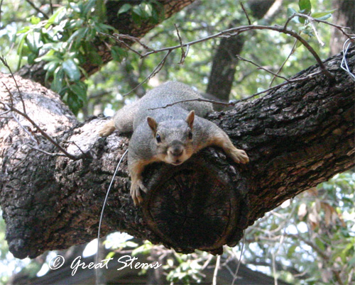 squirrel06-05-11.jpg
