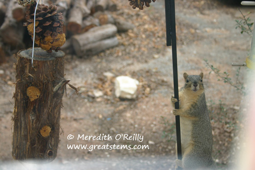 squirrela01-09-12.jpg