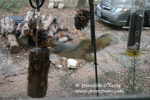 squirrelb01-09-12.jpg