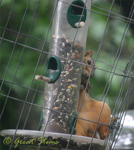 squirrelb07-11-10.jpg