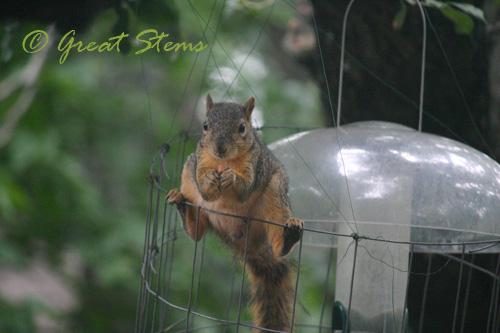 squirrelc07-11-10.jpg