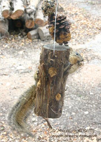 squirreld01-09-12.jpg