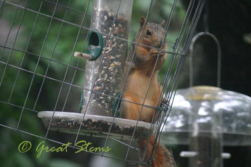squirreld07-11-10.jpg
