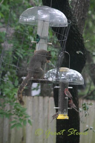 squirrelf07-11-10.jpg