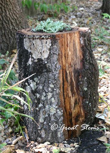 stumpplanterb08-26-11.jpg