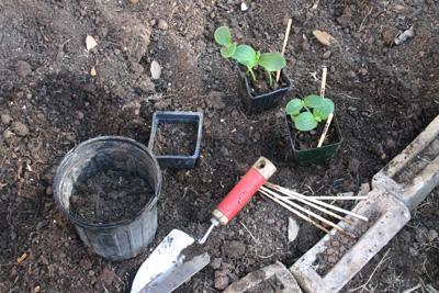 thinningplants07-11-09.jpg