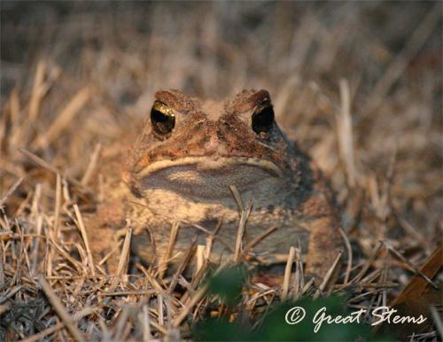 toad02-20-11.jpg