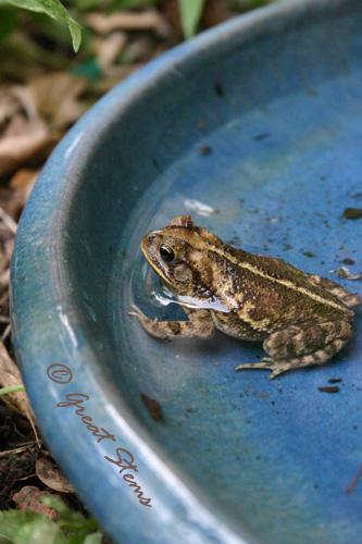 toad05-0211.jpg