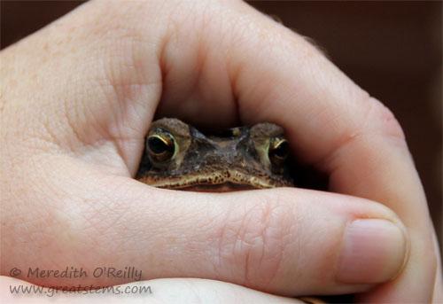 toad05-03-12.jpg
