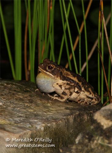 toad05-11-12.jpg