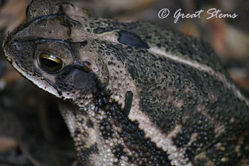 toad09-11-10.jpg