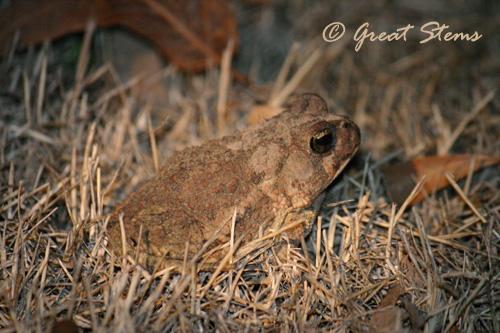 toadb02-20-11.jpg