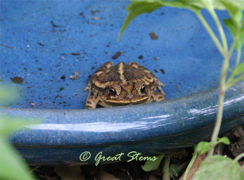 toadb05-0211.jpg