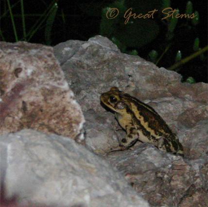 toadb07-31-09.jpg