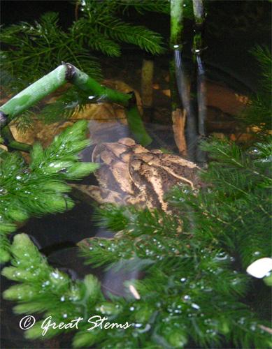 toadpair07-01-11.jpg