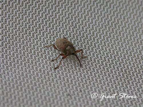 unknownbug10-11-11.jpg