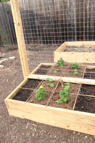 veggietrellis07-24-09.jpg
