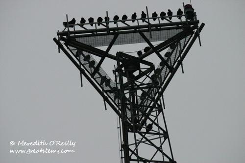 vulturese12-24-11.jpg