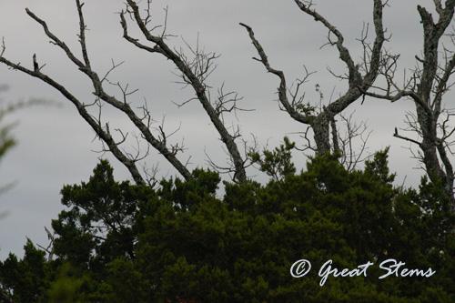 walnutcreekb11-14-10.jpg
