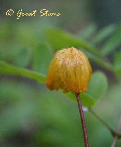 wetgoldenball05-15-10.jpg