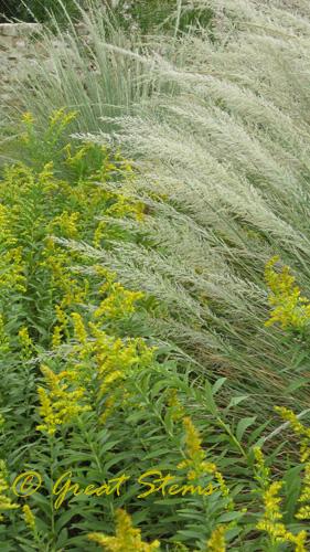 wildflowerorgb10-09-09.jpg