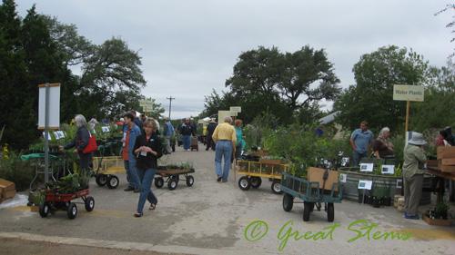 wildflowerorgf10-09-09.jpg