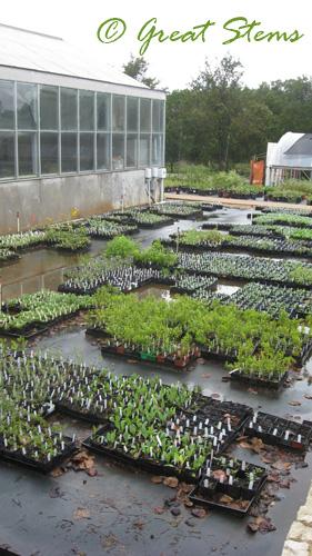 wildflowerorgh10-09-09.jpg