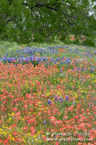 wildflowers03-29-12.jpg