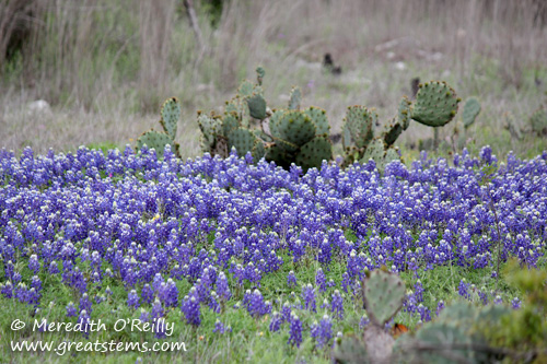 wildflowerse03-29-12.jpg