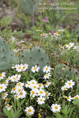 wildflowersf03-29-12.jpg