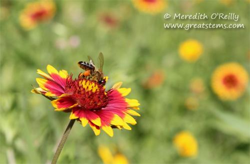 wildflowersg03-29-12.jpg