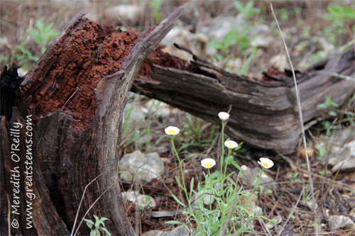 wildflowersh03-29-12.jpg