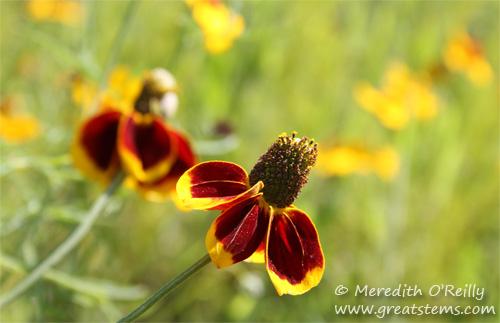 wildflowersi03-29-12.jpg