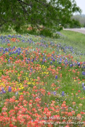 wildflowersj03-29-12.jpg