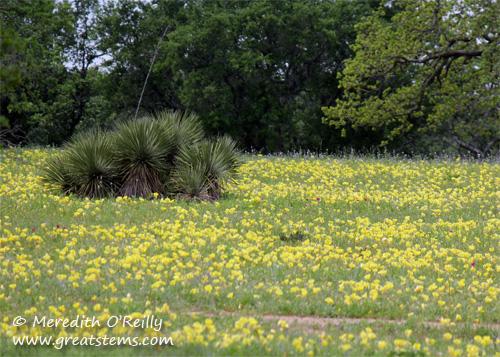 wildflowersk03-29-12.jpg