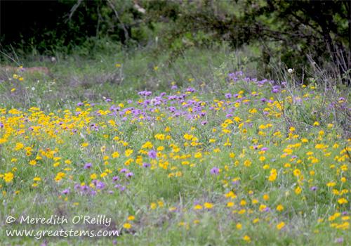 wildflowersl03-29-12.jpg