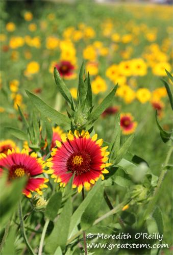 wildflowersm03-29-12.jpg