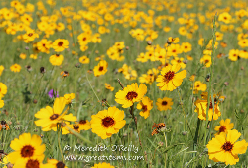 wildflowerso03-29-12.jpg