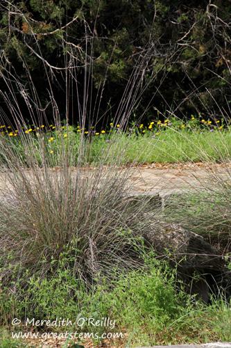 wildflowersq03-29-12.jpg