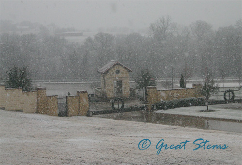 winterb12-29-09.jpg