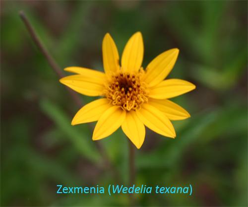 zexmenia06-15-09.jpg