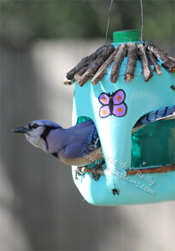 Milk Jug Bird Feeders
